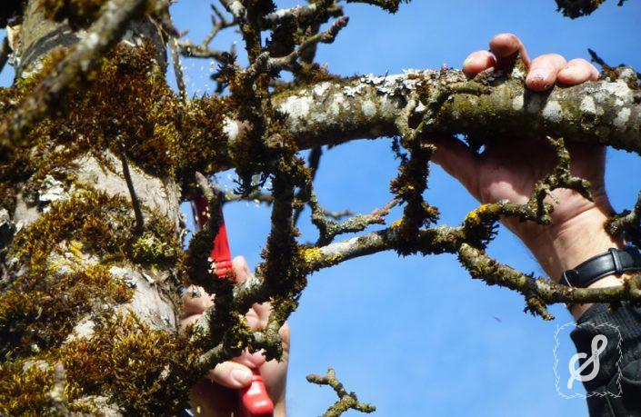 In jedem Garten ein Obstbaum