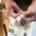 Die Tradition des Bartbindens
